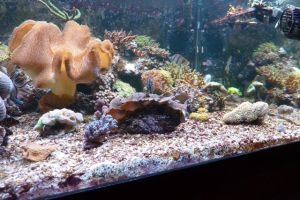 Right side of our aquarium